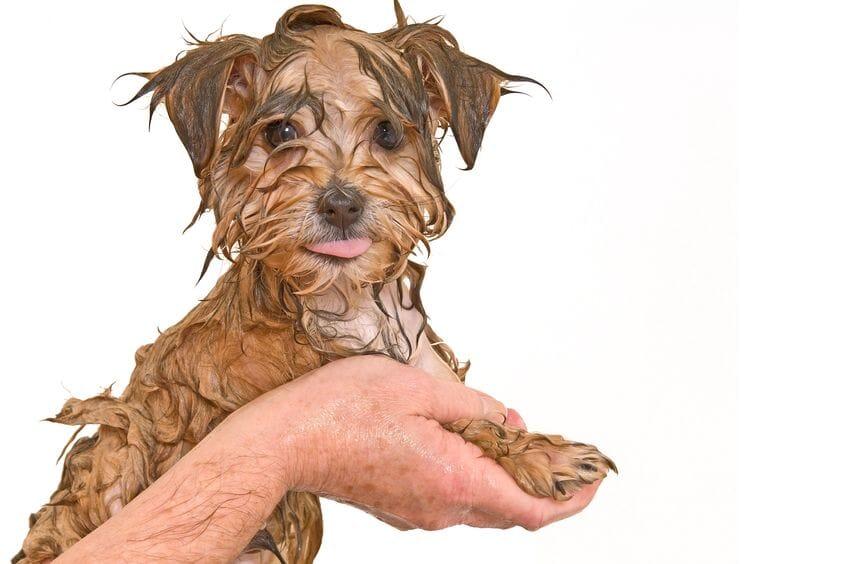 Toilettage pour chiens